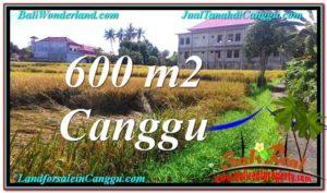 Affordable PROPERTY LAND FOR SALE IN Canggu Pererenan BALI TJCG211
